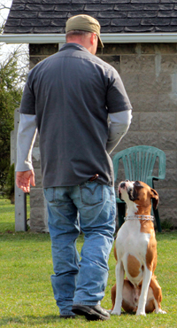 Train your dog with Professional Dog Trainer and K9 Specialist Mike Beckett.