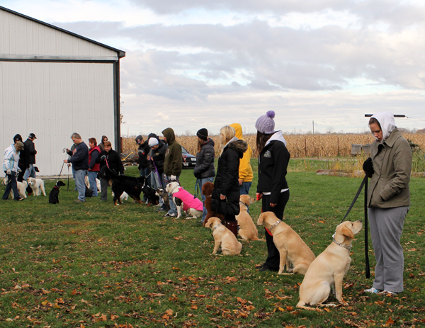 Sunday morning Dog Training Class.